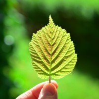 leaf-back-light-close-sheet-framework-green-sun